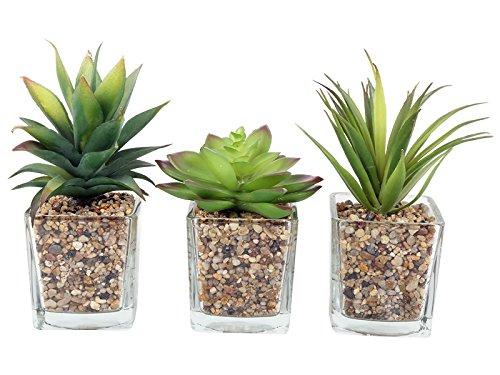 Buzz Set von 3Künstliche Sukkulente/Kakteen, Zimmerpflanze aus Glas mit Stein-Detail, 18cm