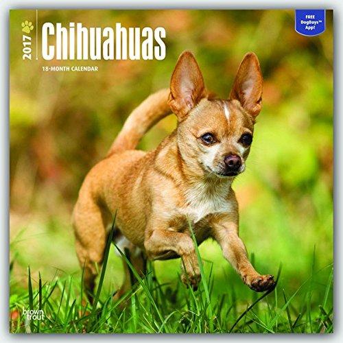 Chihuahuas 2017 - 18-Monatskalender mit freier DogDays-App: Original BrownTrout-Kalender [Mehrsprachig] [Kalender] (Wall-Kalender)