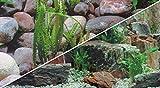 Hobby 31181 Fotorückwandzuschnitt Steine 1