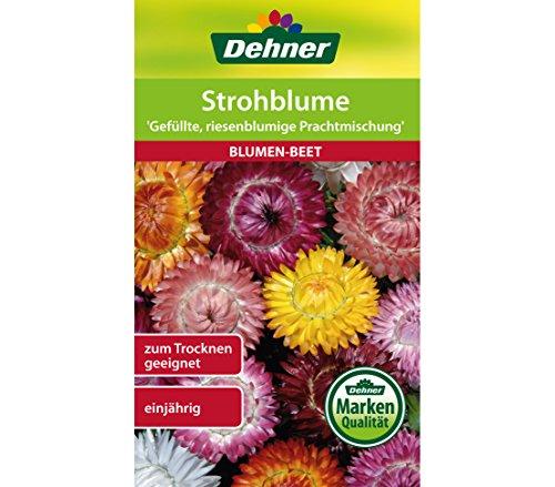"""Dehner Blumen-Saatgut, Strohblume """"Gefüllte, riesenblumige Prachtmischung"""", 5er Pack (5 x 1.1 g)"""