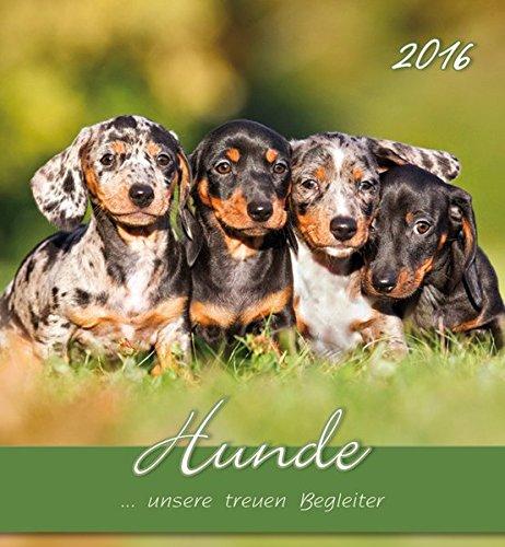 Hunde 2016 - Dogs - Postkartenkalender (...
