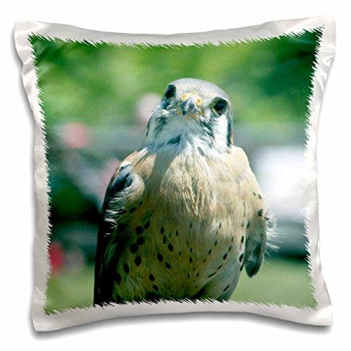 jackie-popp-birds-peregrine-falcon-16x16-inch-pillow-case-pc-195161-1
