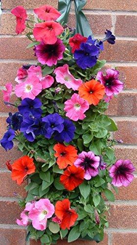 Fleurs à Suspendre Fraise planters- Petit Offre pour 8 sacs