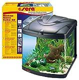 SERA 31102 Biotop Nano Cube 60 60 Eau Douce 60 l avec éclairage PL-T5 et Filtration