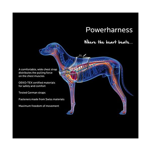 Julius-K9 IDC-Powerharness 1