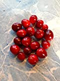 20 Cranberry Samen Fruiting Pflanze groß für Jelly