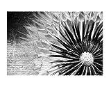 Fenster Wandbild Pusteblume Schwarz & Weiß Fenster Aufkleber Fensterfolie Fenster Tattoo Glas Aufkleber Fenster Kunst Fenster DÃ © cor Fenster Dekoration, Maße: 15cm x 22cm