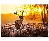 Paul Sinus Art Leinwandbilder   Bilder Leinwand 120x80cm Hirsch im Morgenlicht