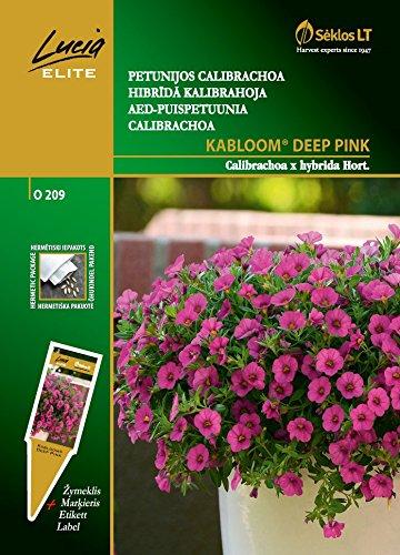 Seklos LT CALIBRACHOA KABLOOM® DEEP PINK - 6 SEEDS