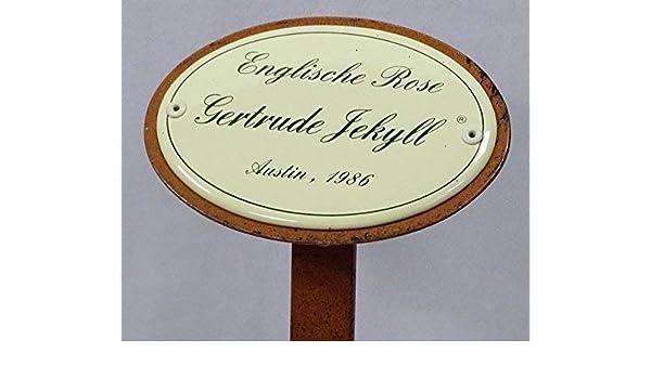 Austin 1986 G1880 Rosenschild Emaille Englische Rose Gertrude Jekyll