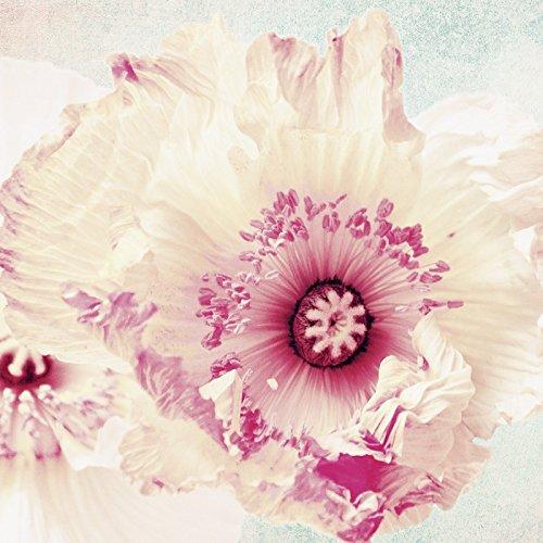 Cristal - Cuadro Artland Cuadro De Pared Con Flores Plantas flores Angela Dölling: Pastel Amapola en diferentes Tamaños - Fucsia/Rosa, 20x20 cm / Imagen de cristal