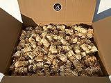 BBQKontor 10kg Premium Anzünder aus Holzwolle & Wachs - Grillanzünder Kaminanzünder Ofenanzünder Brennholzanzünder Kaminholzanzünder Holzanzünder Anzündkamin Grill Grillkohle Holzkohle Briketts