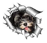Sticar-it Ltd ZERRISSENES METALL Auto-aufkleber süß Havaneser Welpe Hund design Vinyl decal - Multi, Small 105x130mm approx
