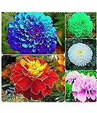 #5: Azalea Gardens Marigold Flower Seeds Combo - Blue, Red, Pink, White, Yellow (10 Seeds Each)