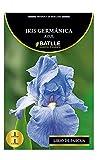Semi Batlle–Bulbo Iris germánica