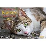 Katzenkalender 2017: DuMonts Katzen Kalender mit kurzweiligen Katzengeschichten