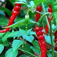 Wohl eine der berühmtesten Chili-Sorten - Cayenne-Chili - 30 Samen