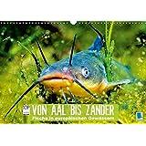 Von Aal bis Zander: Fische in europäischen Gewässern (Wandkalender 2017 DIN A3 quer): Heimische Raubfische: Unter Wasser auf der Lauer (Monatskalender, 14 Seiten) (CALVENDO Tiere)