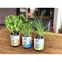 Blue Farmers | Herbes aromatiques | Cultivez votre Coriandre, Ciboulette et Basilic à la Maison | Pousse toute l'année | Graines Françaises et BIO | Prêt à Pousser | Facile et Ludique | Potager d'intérieur | Potager pas connecté