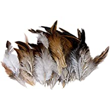 Natural Decoration Rooster Cock Feather--Ideal for Costumes, Hats, Home Decor, etc (accesorio de disfraz)