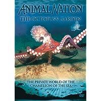 Animal Nation - Octopus Garden