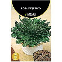 Bulbos - Rosa de Jerico - Batlle