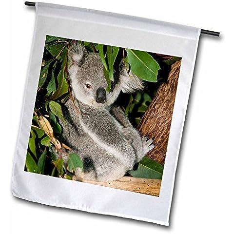 3dRose FL _ 70224_ 1, Australia Brisbane Albero di fico,
