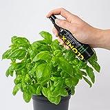 Estimulador de raíces para esquejes Ionic Clonex Mist Growth Technology (100ml)