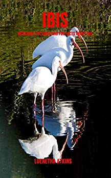 U Torrent Descargar Ibis: Incredible Pictures and Fun Facts about Ibis Gratis Formato Epub