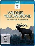 Wildnis Yellowstone - Im Wechsel der Extreme [Blu-ray]