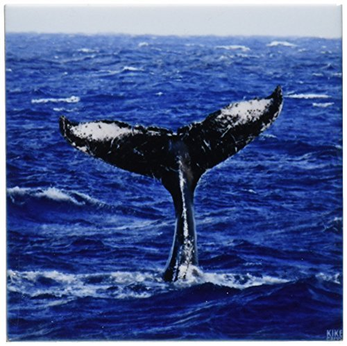 Kike Calvo Wale N Delfine–Buckelwal–Untersetzer, keramik, marineblau, set-of-4-Ceramic