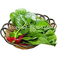 Malabar Spinach Seed / 1 Pack 30Pcs Seeds Basella Rubra Red Vine Spinach Garden Seeds