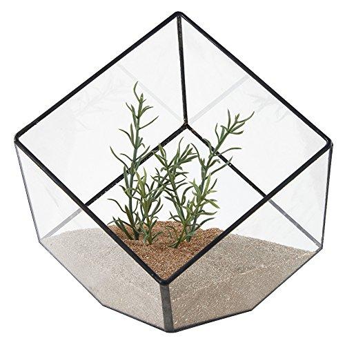 Asvert Geometrische dekorative Terrarium Cube geneigte Klarglas Pflanzer Tischplatte schwarz Kleine Air Plant Halter Display Box saftige Moos Blumentopf Container (style6)