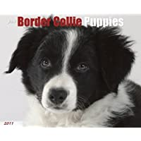 Border Collie Puppies 2011 Wall Calendar (Just (Willow Creek)) by Willow Creek Press (2010-07-01) - Collie Calendario 2010