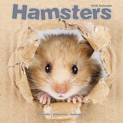 Hamsters - Hamster 2018: Original Avonside-Kalender (Square)