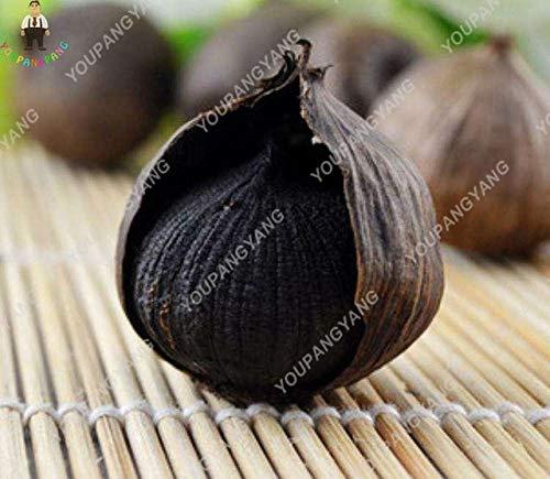 pinkdose 100pcs rare piante nero aglio sano bonsai biologica piante piante verde verdura pianta facile da coltivare per la casa giardino plantin: 1