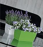 Prosper Plast dupp400-s449Coubi box 39x 19x 18.2cm, colore bianco