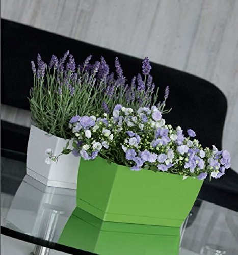 high-gloss-houseplant-herb-windowsill-planter-wide-rectangular-flower-pot-with-saucer-range-of-colou