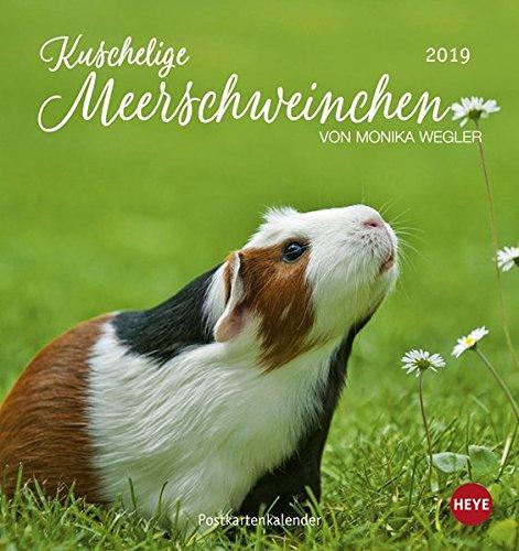 Kuschelige Meerschweinchen Postkartenkalender - Kalender 2019