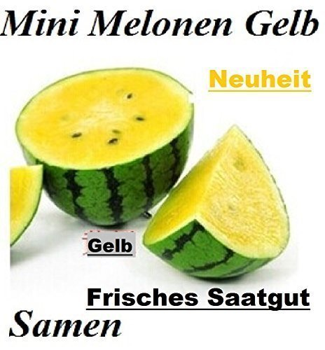 20x Mini Melonen Gelb Samen Saatgut Obst Pflanze Rarität essbar lecker Melone Neuheit #137 (Import-mini)