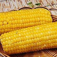 AGROBITS 10 Semillas Semillas de maíz sabroso vegetal de la herencia de semillas de palomitas de maíz no modificado genéticamente Orgánica 10PC