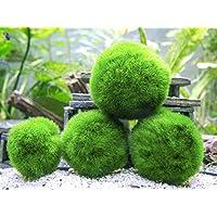 Aquatic Arts 10Marimo Moss Balls by, 2,5cm