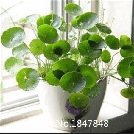 100pcs de livraison gratuite / lot New Magic Bean usine Seeds cadeau Growing message Parole 08004