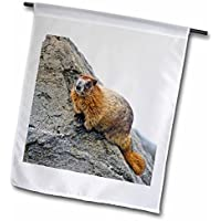 Usa, Washington, North Cascades NP, Copper Ridge Adult Hoary Marmot 30,5x 45,7cm, decorativo double Sided Garden Flag