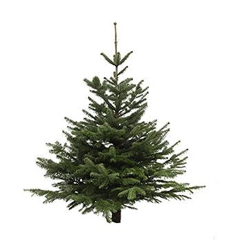 Dominik Blumen Und Pflanzen, Weihnachtsbaum Nordmanntanne, Ca. 125 - 140 Cm Hoch, Geschlagen 0