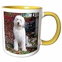 3dRose Dogs Old English Sheepdog-Old English Sheepdog-Cups