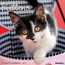 Just Kittens by Willow Creek (2016-08-01)
