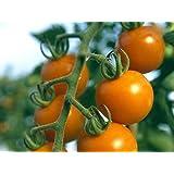 Orange Cherry-Tomate - Sun Drop - 20 Samen