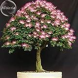 Pinkdose® 2018 Heißer Verkauf Silk Floss Baum Albizzia Julibrissin Bonsai Nemu Baum, 10 Samen, dekorative Albizia Blume Mimosa Baum E3812