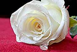 Sim,29.5 X 19.6 inch Jigsaw Puzzle Games We Played 1000 Piece Made of Premium Basswood DIY Present in Box Present Wrap Room Mural : Macro White Rose Story Love